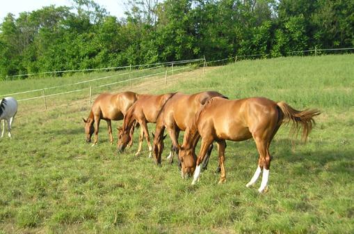 Elevage de chevaux  - Castres