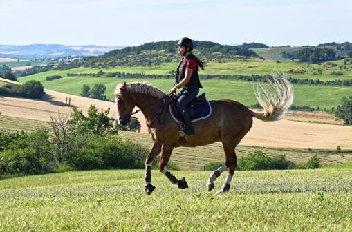 Environnement du cheval - Castres