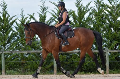 Valorisation du cheval à Castres