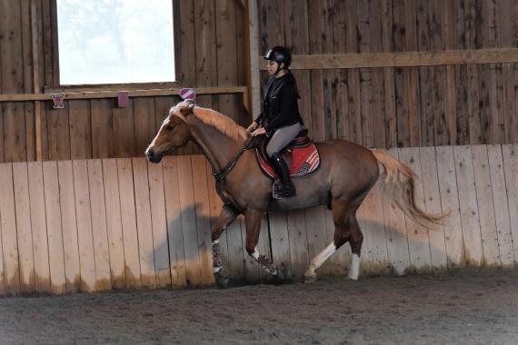 centre équestre pour chevaux à Pratviel