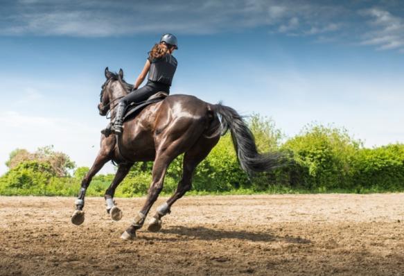 coaching par le cheval - Toulouse